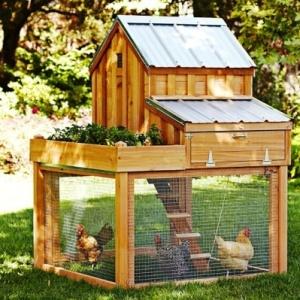 Chicken-Coop-1